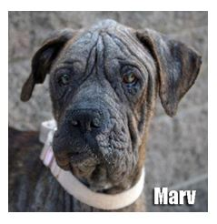 Marv before veterinary treatment