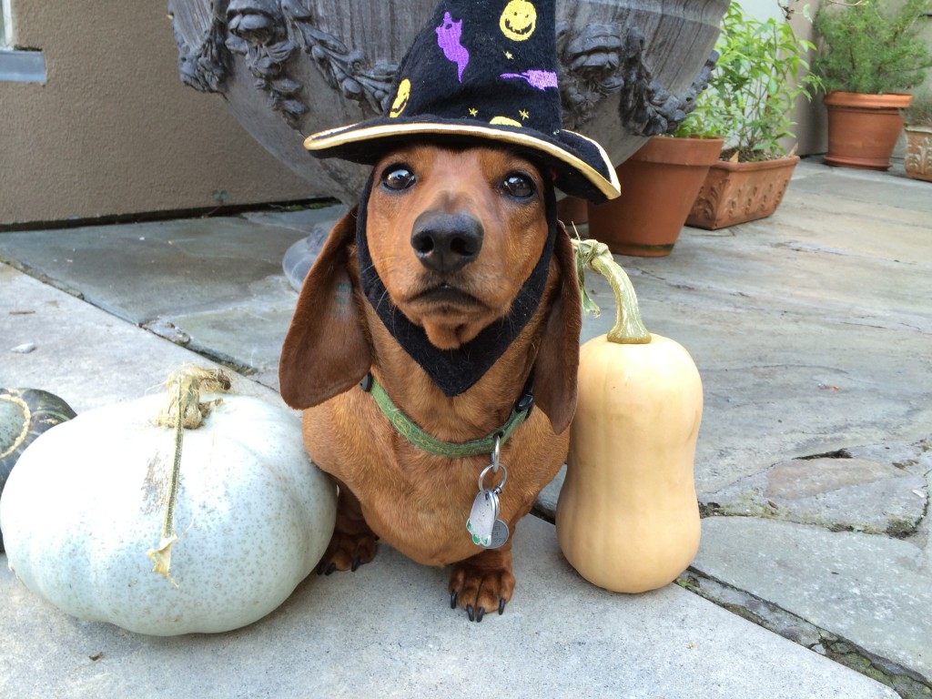 Vancouver vets offer safety tips for halloween.