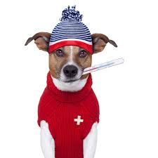 Can My Pet Catch a Cold?