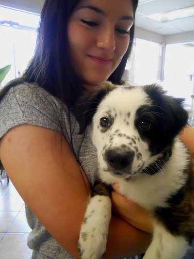 Puppy of the Week: Odie