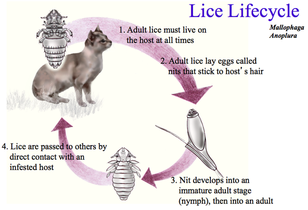 Hair loss in cats treatment