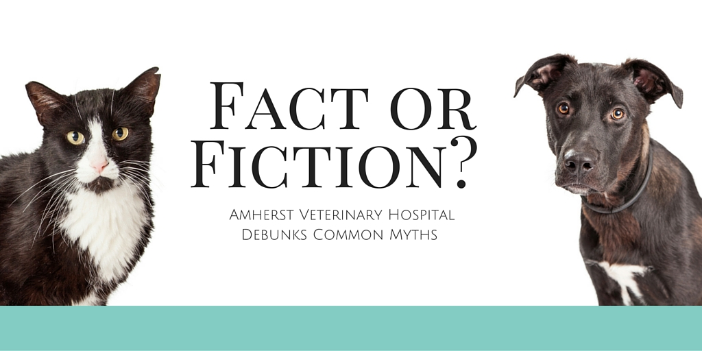 Our Vancouver Veterinary Hospital Debunks Popular Myths