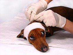 Learn more about our intensive care options at our Vancouver Animal Hospital.