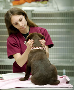 Our Vancouver Animal Hospital offers continuous care for our patients.