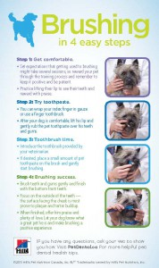 Learn how to brush your pet's teeth at our Vancouver Animal Hospital.