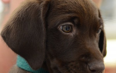 Socializing Your Puppy in a COVID-19 World
