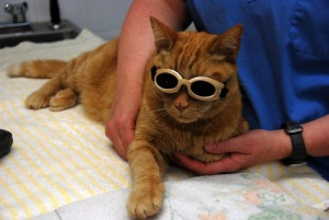 Conditions Treated with Laser Therapy