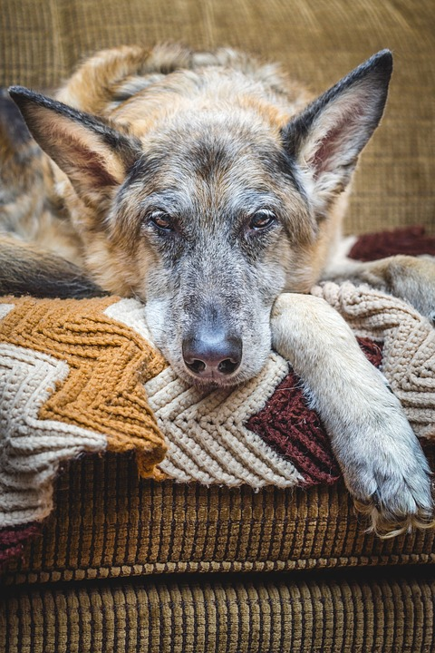 January is Senior Pet Month at Amherst Veterinary Hospital