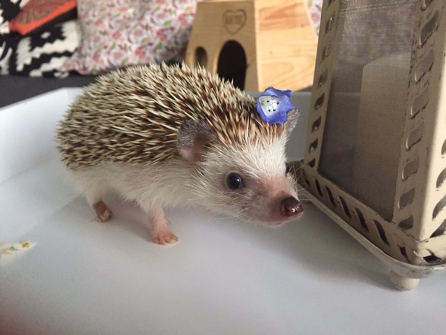 Pet of the Week: David Hasselhog