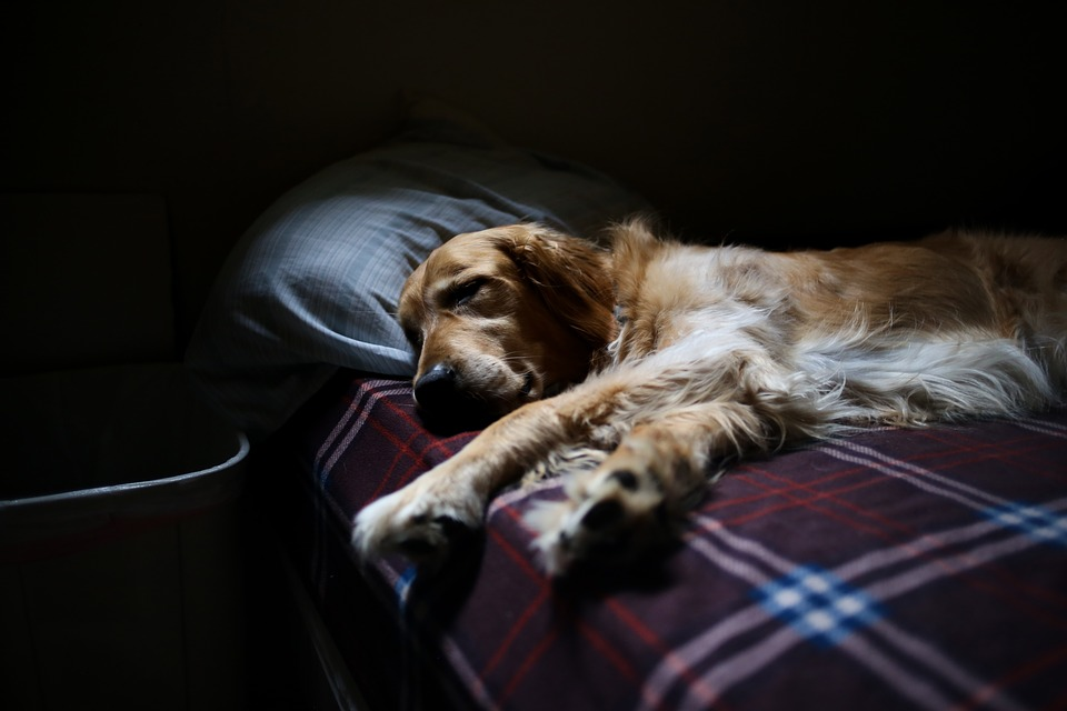 Night-time Waking in Senior Dogs